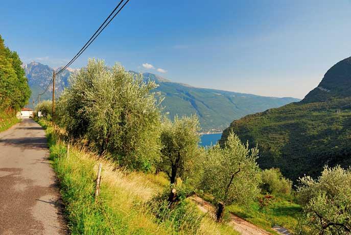 Gardasee: Olivenhaine